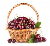 ripe cherries in a basket isolated on white background
