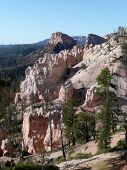 Rock Faces & Pine Trees of Bryce Canyon.
