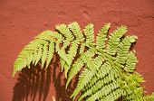 Fern On A Red Wall