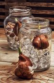 Sprouted Bulbs Plants