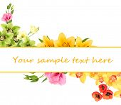 Beautiful flowers and card with space for your text isolated on white