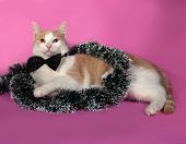 Red And White Cat In Bow Tie Wrapped Christmas Tinsel Sitting On Pink