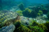 marine turtle swimming underwater
