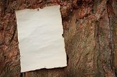 Antique Paper Nailed To A Tree