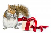 Squirrel and gift boxes on white background