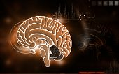 stock photo of thalamus  - Digital illustration of  brain in colour  background - JPG
