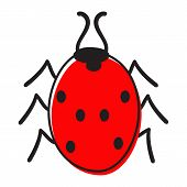 Ladybug Isolated