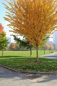 Beautiful color of Fall foliage of trees in park