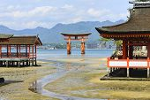 Floating Torii Gate In Itsukushima Shrine, Japan
