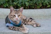 Shorthaired stray cat