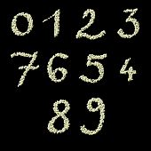 Numeric figures of raw civet coffee beans