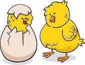 Easter Chicks Cartoon Illustration