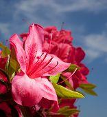 Large Flower