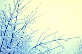 picture of view from space needle  - Snow and ice on branches - JPG