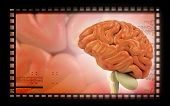 foto of thalamus  - Digital illustration of  brain in colour  background - JPG