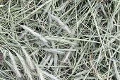 Closeup of grayish hay