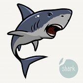 picture of aquatic animal  - Vector illustration of Angry Shark - JPG