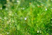 Fresh Moisten Green Grass