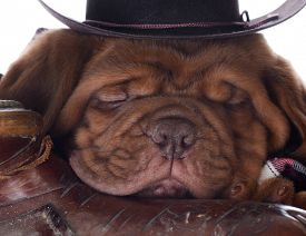 picture of western saddle  - cute puppy  - JPG