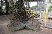 stock photo of bird fence  - The box is made of wire - JPG