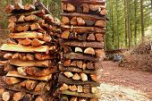 image of firewood  - the pile of firewood in the forest - JPG