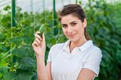 image of cucumber  - Happy Young woman holding and eating cucumbers in a hothouse cultivated with green fresh cucumber plants - JPG