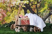 stock photo of wagon wheel  - An adorable newborn sleeping contentedly outside under blossoming trees  in rustic old - JPG