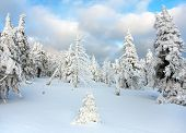 pic of snowy hill  - beautiful wintry view of snowy wood on mountains  - JPG
