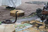 stock photo of cobra  - Cobra dancing at famous Marrakesh square - JPG
