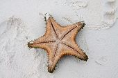 picture of starfish  - Colored Starfish on white sand and crystal water - JPG