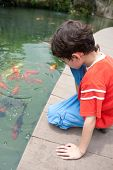 stock photo of fish pond  - Young boy with sister feeding ornamental koi carp fish in a pond - JPG