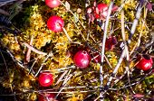 pic of swamps  - Red cranberry growing in a swamp closeup - JPG