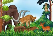 picture of jungle animal  - Different kind of animals in the jungle - JPG