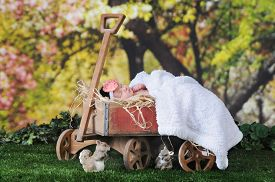 stock photo of wagon  - An adorable newborn sleeping contentedly outside under blossoming trees  in rustic old - JPG