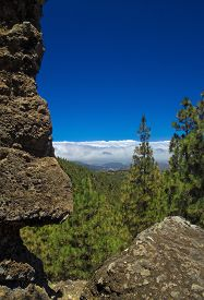 pic of burro  - Inland Central Gran Canaria Las Cumbres the highest areas of the islands view over treetops towards Panza de Burro Donkey Belly cloud cover almost always present at the north of the Canary Islands  - JPG