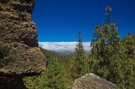foto of burro  - Inland Central Gran Canaria Las Cumbres the highest areas of the islands view over treetops towards Panza de Burro Donkey Belly cloud cover almost always present at the north of the Canary Islands  - JPG