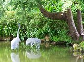 Crane Statuary in Garden Pond