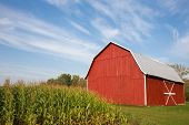 Red Barn With Corn And Dramatic Sky poster