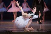 Постер, плакат: Prima ballerina white swan