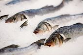 Постер, плакат: Fresh fish on ice on market store shop Dorado fish on ice Fish