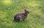 Waiting Rabbit