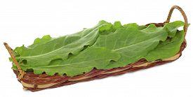 image of sorrel  - the fresh green leaves of sorrel in the basket isolated on white background - JPG