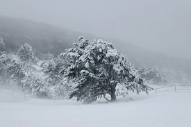stock photo of paysage  - landscape forest in winter blizzard it - JPG
