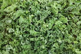 stock photo of cruciferous  - Chopped kale leaves as an abstract background texture - JPG