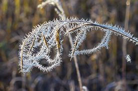 pic of novosibirsk  - The first frost. Cobwebs on the grass covered with frost. Russia,Siberia,Novosibirsk region,Kolyvan district, coast of the river Chaus ** Note: Shallow depth of field - JPG