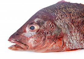 image of red snapper  - red snapper in front of white background - JPG