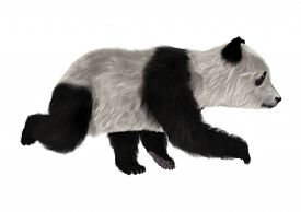picture of panda bear  - 3D digital render of a panda bear cub running isolated on white background - JPG