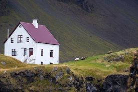 picture of farmhouse  - Farmhouse and sheep grazing in remote parts of Iceland - JPG