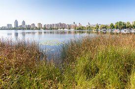 image of sand lilies  - Obolon Skyline close to the Dnieper river in Kiev Ukraine - JPG