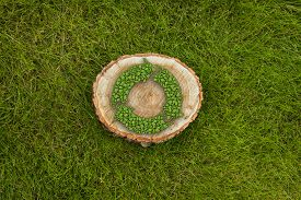 picture of disafforestation  - tree stump on the green grass with recycle symbol - JPG